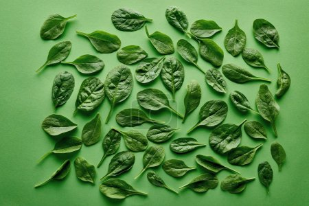 Photo for Top view of fresh and organic basil on green background - Royalty Free Image