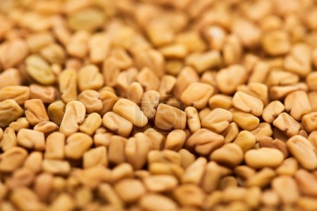 Photo for Close up view of unprocessed bulgur grains - Royalty Free Image