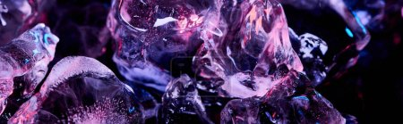 panoramic shot of transparent ice cubes with purple colorful lighting isolated on black