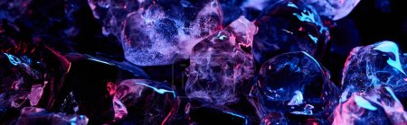 Photo for Panoramic shot of clear ice cubes with purple colorful lighting isolated on black - Royalty Free Image