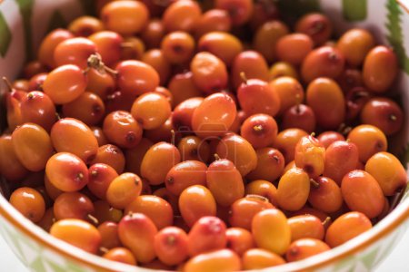 Photo for Close up view of ripe berries of sea buckthorn - Royalty Free Image