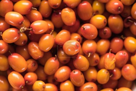 Photo for Close up view of fresh raw sea buckthorn - Royalty Free Image