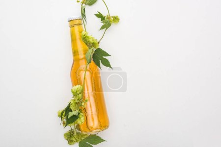 top view of yellow beer in bottle with green hop on white background