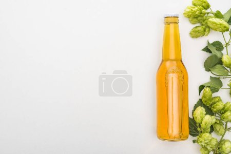 top view of beer in bottle with green hop on white background with copy space