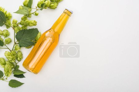 Photo for Top view of beer in bottle with green blooming hop on white background - Royalty Free Image