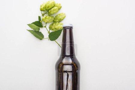 Photo pour Vue supérieure de la bière dans la bouteille brune avec le houblon vert sur le fond blanc - image libre de droit