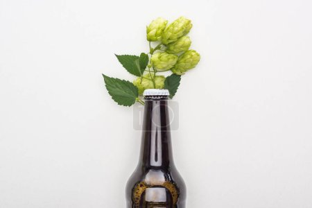 top view of fresh beer in bottle with hop on white background