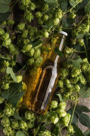 vue du dessus de la bière en bouteille en houblon vert