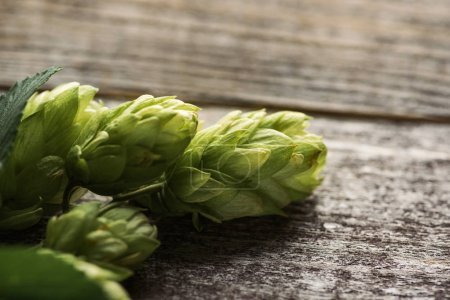 close up view of green hop on wooden table