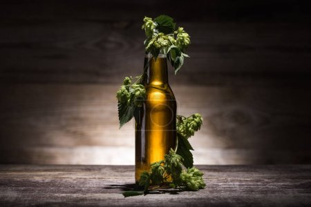 beer in bottle with fresh hop on wooden table in darkness with back light
