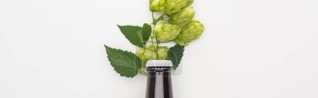 top view of beer in bottle with hop on white background, panoramic shot