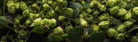 Photo pour Vue de dessus du houblon vert avec feuilles, vue panoramique - image libre de droit