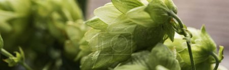 Photo for Close up view of organic green hop on wooden surface, panoramic shot - Royalty Free Image