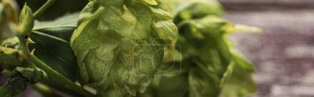 Photo pour Fermer la vue vers le haut du houblon vert organique sur la table en bois, projectile panoramique - image libre de droit