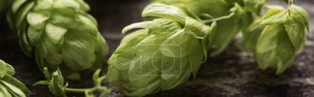 close up view of fresh green hop on wooden table, panoramic shot