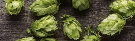 Photo for Close up view of organic green hop on wooden table, panoramic shot - Royalty Free Image