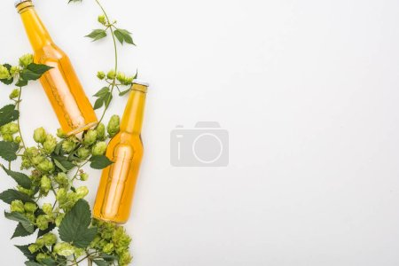 top view of beer in bottles with green hop on white background