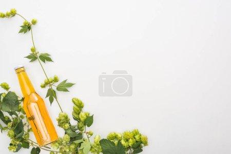 vue du dessus de la bière en bouteille près du houblon vert sur fond blanc