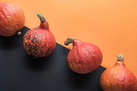 Photo pour Vue supérieure des citrouilles mûres sur le fond orange et noir - image libre de droit