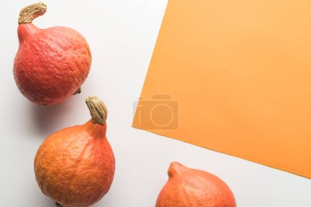 top view of pumpkins on white and orange background