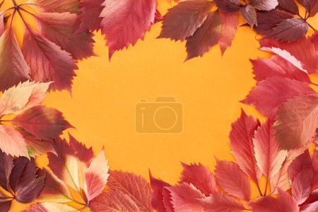 Photo for Frame of colorful red leaves of wild grapes isolated on yellow with copy space - Royalty Free Image