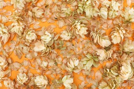 Photo pour Vue de dessus des brindilles avec des cônes de graines de houblon près des pétales sur fond jaune - image libre de droit
