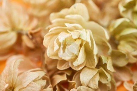 Photo pour Vue rapprochée du houblon sec près des pétales sur fond jaune - image libre de droit