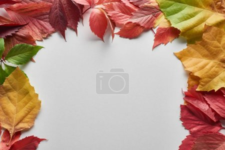 Photo for Colorful autumn leaves of alder, maple and wild grapes on white background - Royalty Free Image