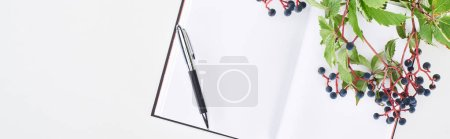 Photo for Panoramic shot of blank notebook with pen near branch of wild grapes with green leaves and berries isolated on white - Royalty Free Image