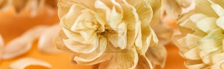 Photo for Close up view of dry hop seed cones near petals on yellow, panoramic shot - Royalty Free Image