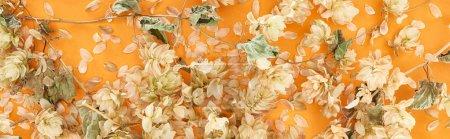Photo pour Plan panoramique de houblon sec éparpillé près des pétales sur fond jaune - image libre de droit