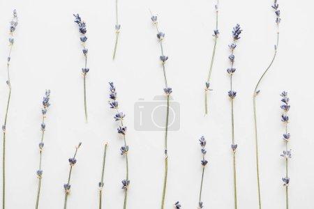 Photo pour Vue de dessus des brindilles de lavande sèches avec des fleurs isolées sur blanc - image libre de droit