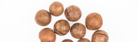 Photo for Top view of Macadamia nuts scattered isolated on white, panoramic shot - Royalty Free Image