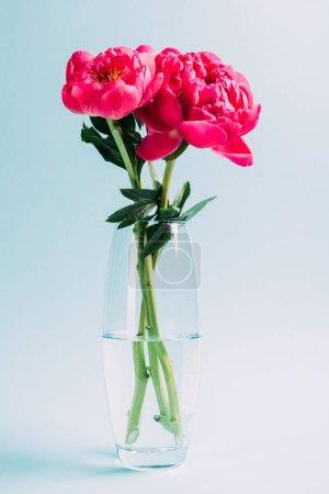 Photo pour Bouquet de pivoines roses dans un vase en verre sur fond bleu - image libre de droit