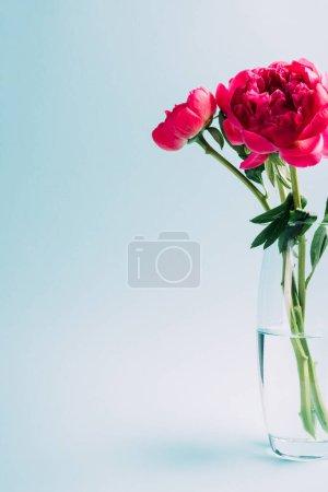 Foto de Bouquet de pieles rosadas en jarrón de vidrio en fondo azul - Imagen libre de derechos