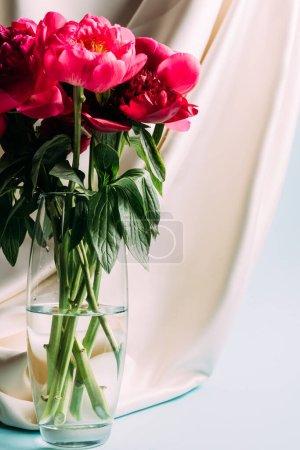 Foto de Bouquet de peronías rosas en jarrón de vidrio cerca de tela de beige en fondo azul. - Imagen libre de derechos