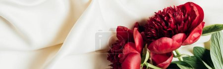 top view of red peonies on white cloth, panoramic shot