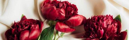 Photo pour Vue du haut du bouquet de pivoines rouges sur toile blanche, vue panoramique - image libre de droit