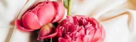 Foto de Vista superior de las peonías rosas hermosas sobre tela blanca, tiro panorámico. - Imagen libre de derechos
