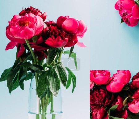 Photo pour Bouquet de pivoines roses dans un vase en verre sur fond bleu, collage - image libre de droit