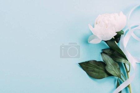 Photo pour Vue de dessus de pivoine blanche avec ruban sur fond bleu - image libre de droit