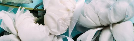 Photo for Top view of white peonies with ribbon on blue background, panoramic shot - Royalty Free Image