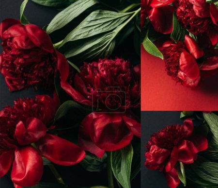 Photo pour Collage de pivoines rouges sur fond noir et rouge - image libre de droit