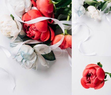 Photo pour Collage de pivoines rouges et blanches avec ruban sur fond blanc - image libre de droit