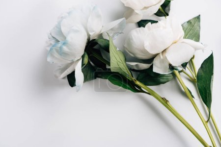 Photo for Top view of blue and white peonies with ribbon on white background - Royalty Free Image