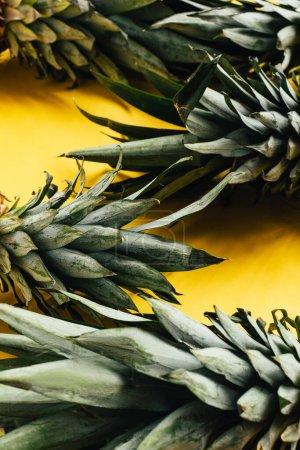 Photo pour Feuilles d'ananas vert sur fond jaune - image libre de droit
