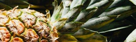 vista de cerca de la piña fresca madura con hojas verdes, plano panorámico