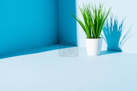 Photo pour Plante verte en pot de fleurs blanc sur fond bleu - image libre de droit