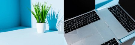 collage of modern laptops on blue workplace with green plant, panoramic shot