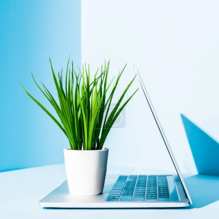Photo for Modern laptop on blue workplace with green plant in white flowerpot - Royalty Free Image